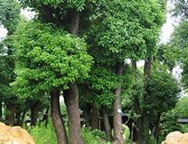 苗木種養03