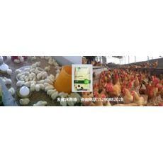 滨州市养鸡发酵床没有稻壳怎么办