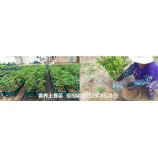 济源市绿色有机肥蔬菜用什么肥料没有污染