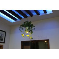 植物氧生灯