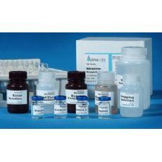 小鼠蛋白磷酸酶(PP)ELISA试剂盒