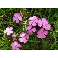 花卉租摆-口碑好的找双宇花卉苗木-花卉租摆