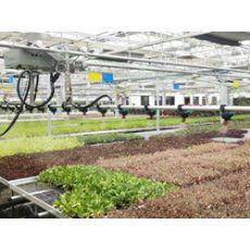 茄子种苗供应商-优育的茄子种子出售