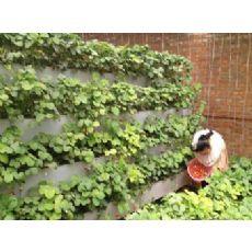 无土栽培草莓槽,基质无土栽培槽,种植园立体栽培槽价格优惠