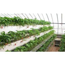 农业大棚用草莓栽培槽,白色栽培种植槽,果蔬种植栽培槽