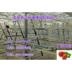 草莓立体种植槽 草莓滴灌种植技术