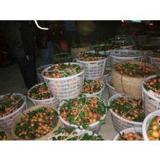 桂林哪里买质量硬的水果塑料箩筐——塑料箩筐厂家