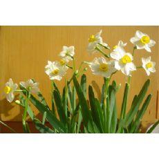 完好的成都花卉优选双成园艺场_四川花卉种植