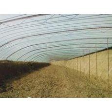 山东值得信赖温室工程公司——薄膜温室大棚