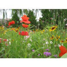 大量供应草种花种 景观组合花海专用花卉种子
