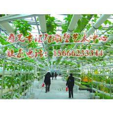 潍坊值得信赖农业无土栽培式建设公司,当属汇智雕塑:寿光无土栽培模式建设