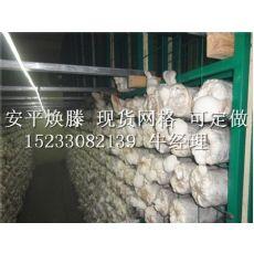 金针菇网片|河北价格适中的杏鲍菇网片