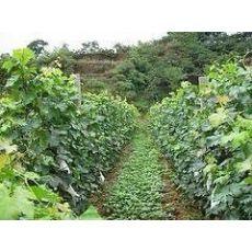 【好口碑@金色田园】哪里有生态农场+潍坊采摘园+山东有机采摘园