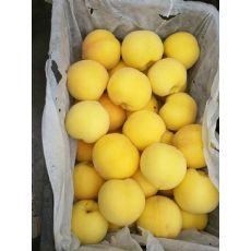 陕西【【黄金蜜桃】黄金蜜||黄金蜜桃苗||黄金蜜桃树苗】种植基地
