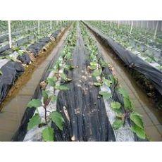 广西规模大的黑白双色地膜生产基地_广西哪里有农业黑白膜