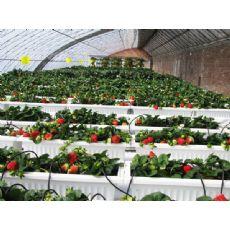 草莓大棚哪家专业:蔬菜大棚建设