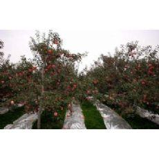 【度娘求指点】苹果树反光膜【轮胎包装带】果树防水反光膜加工设备-宝利
