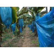 买优质广西香蕉保护膜,南宁市晟和兴塑胶是您优先的选择  ,广西优质的香蕉保温膜
