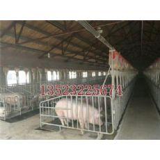 猪场自动料线生产厂家 猪场自动料线 猪场自动料线公司