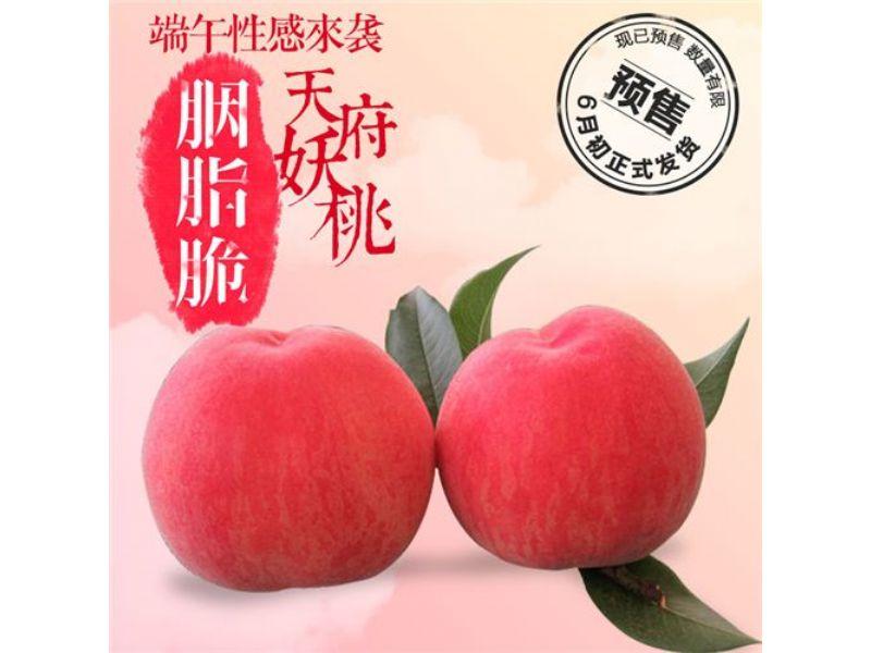 加纳岩桃苗,吐鲁番桃树苗新优品种