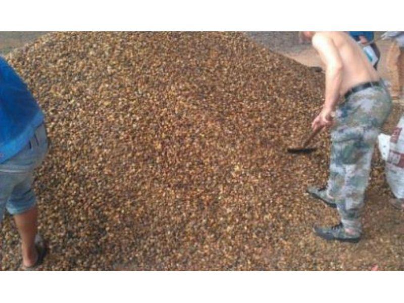 威海鹅卵石.威海变压器专用鹅卵石水处理鹅卵石滤料厂家
