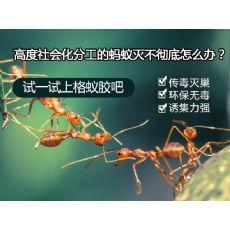 上海除四害公司|上海杀虫服务|上海害虫防治公司