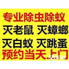 上海家里怎么会有白蚂蚁