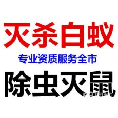 上海专业除白蚂蚁