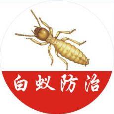 上海饭店抓蟑螂