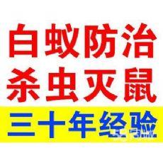 上海跳蚤防治