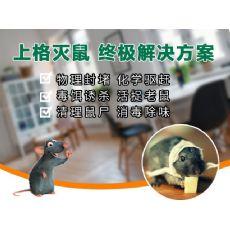 上海家庭灭白蚁