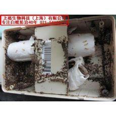 上海灭跳蚤专家