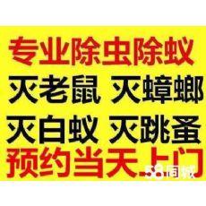 浦东新区除白蚁公司