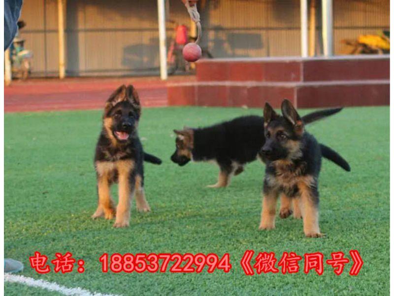 安徽黄山祁门县|狗场联系方式