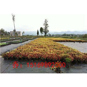 绥化市铜止水生产厂家15169892000乔